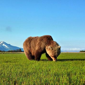 Bear Wallpaper 1 screenshot 2