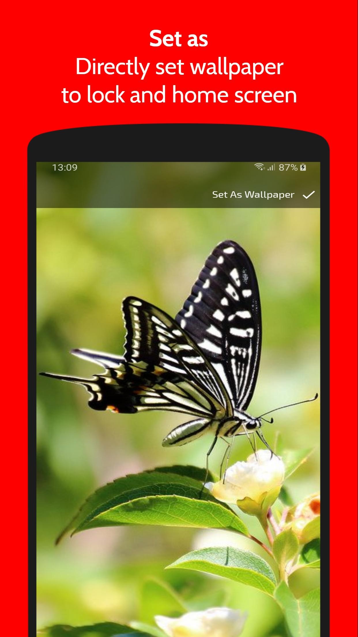 Butterfly Wallpaper Free Hd 4k Backgrounds For Android Apk Download