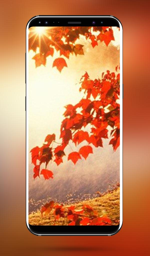 Autumn Nature Wallpapers 4k Full Hd Wallpapers For Android Apk Download