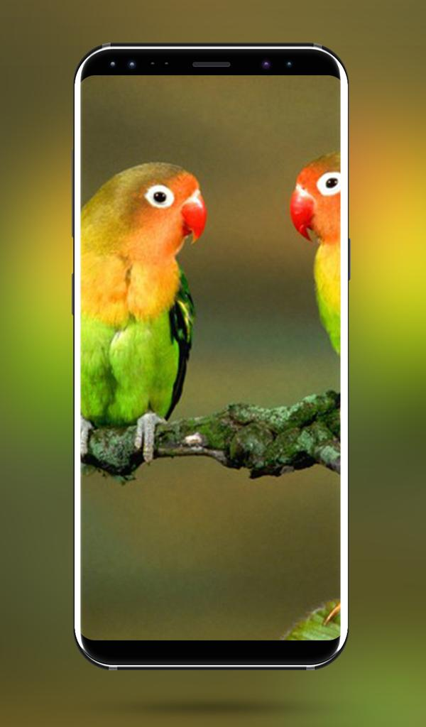 Parrot Bird Hd Wallpapers 4k Full Hd Wallpapers For Android Apk Download