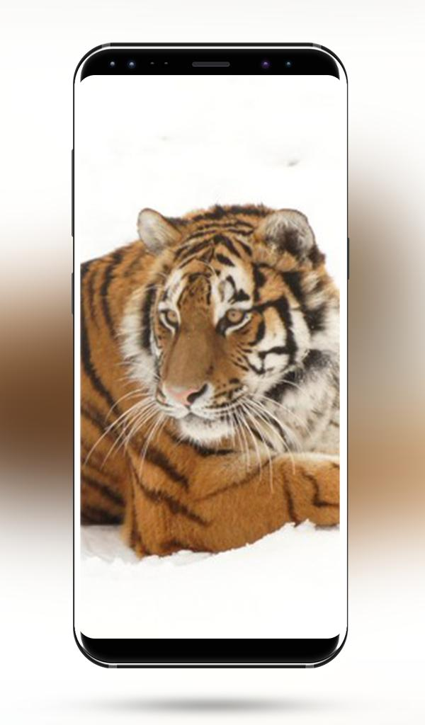 Tiger HD Wallpapers for Android - APK Download