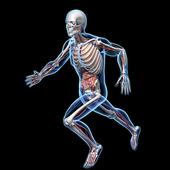 Human Anatomy RA icon