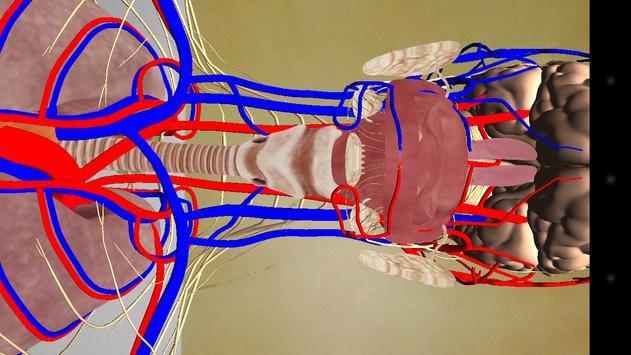 Human Anatomy RA screenshot 2