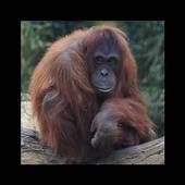 Dublin Zoo Visitor App icon