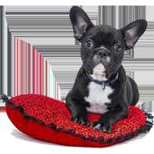 Dog breeds ikona