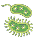 Bacteria: Types, Infections APK