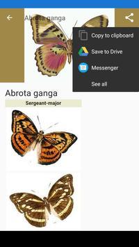 Butterflies:Encyclopedia.Description,Photo,Offline screenshot 2