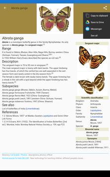 Butterflies:Encyclopedia.Description,Photo,Offline screenshot 8