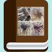 Spider species ebook icon