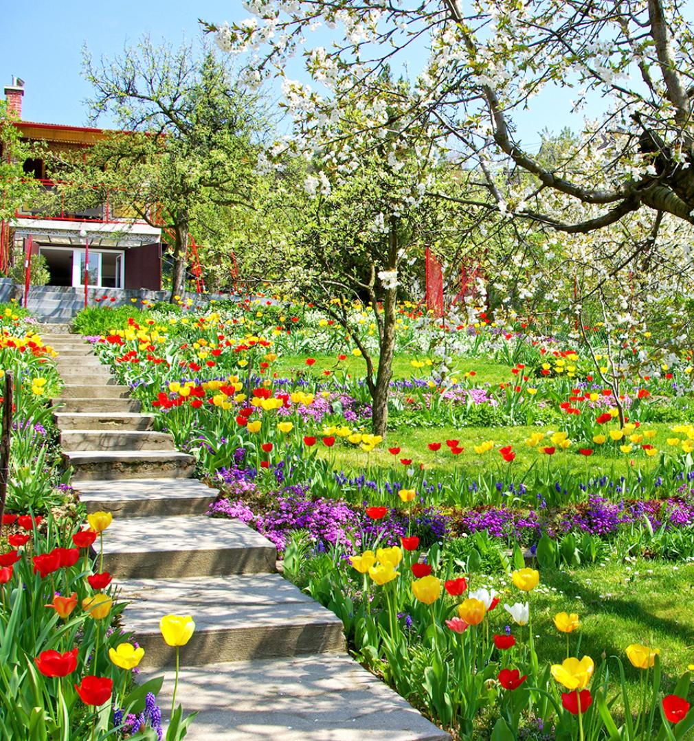 Spring Flowers Garden Wallpaper For Android Apk Download
