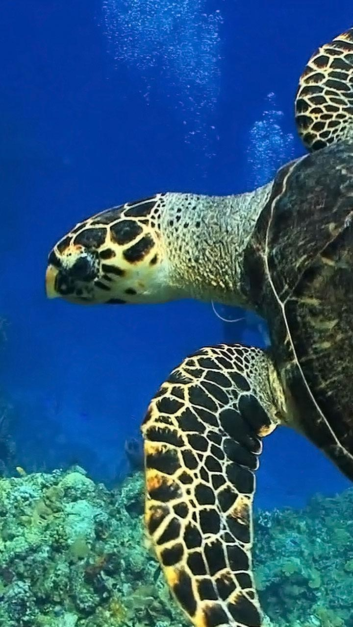 Turtles Lock Screen Live Wallpaper For Android Apk Download