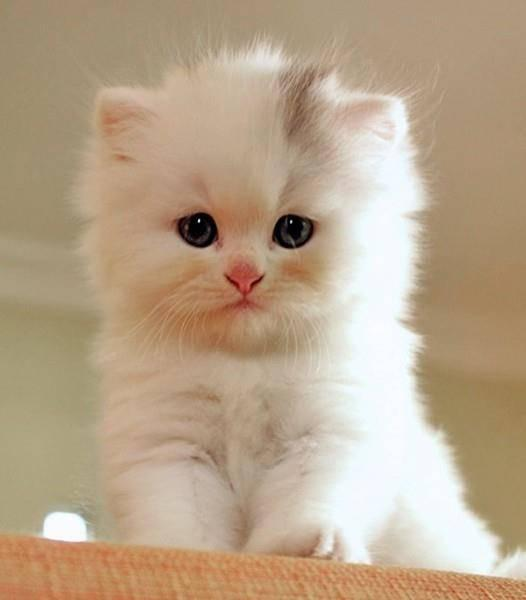 Cat Wallpaper Hd Cute Gifs Videos Wastickers For Android Apk Download