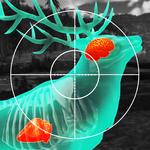 Wild Hunt:Sport Hunting Games.Jogo Caça Esporte 3D APK