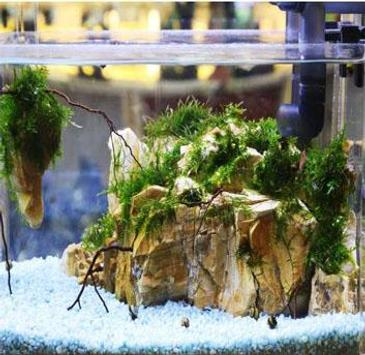 The Latest Aquascape Design For Android Apk Download