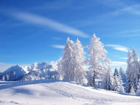 Winter Wallpaper screenshot 6
