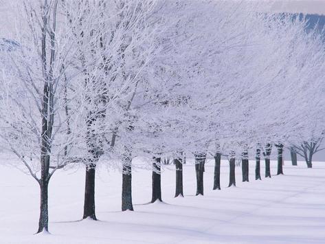 Winter Wallpaper screenshot 7