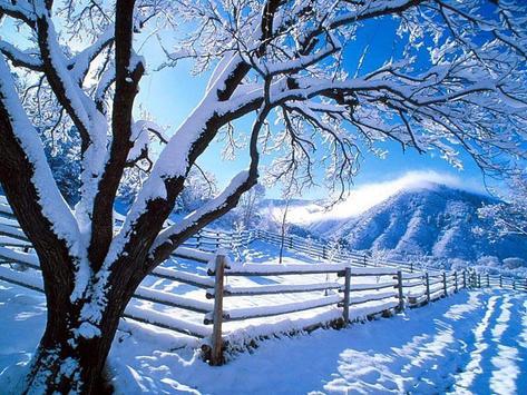 Winter Wallpaper screenshot 8