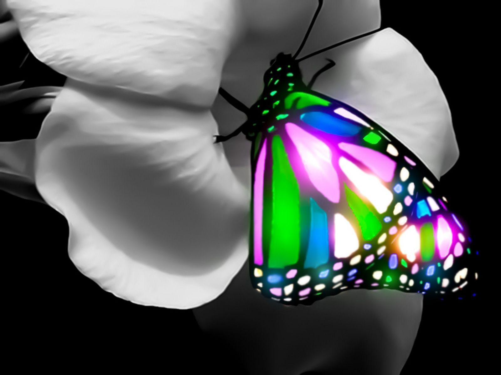 3d Butterfly Wallpaper For Android Apk Download