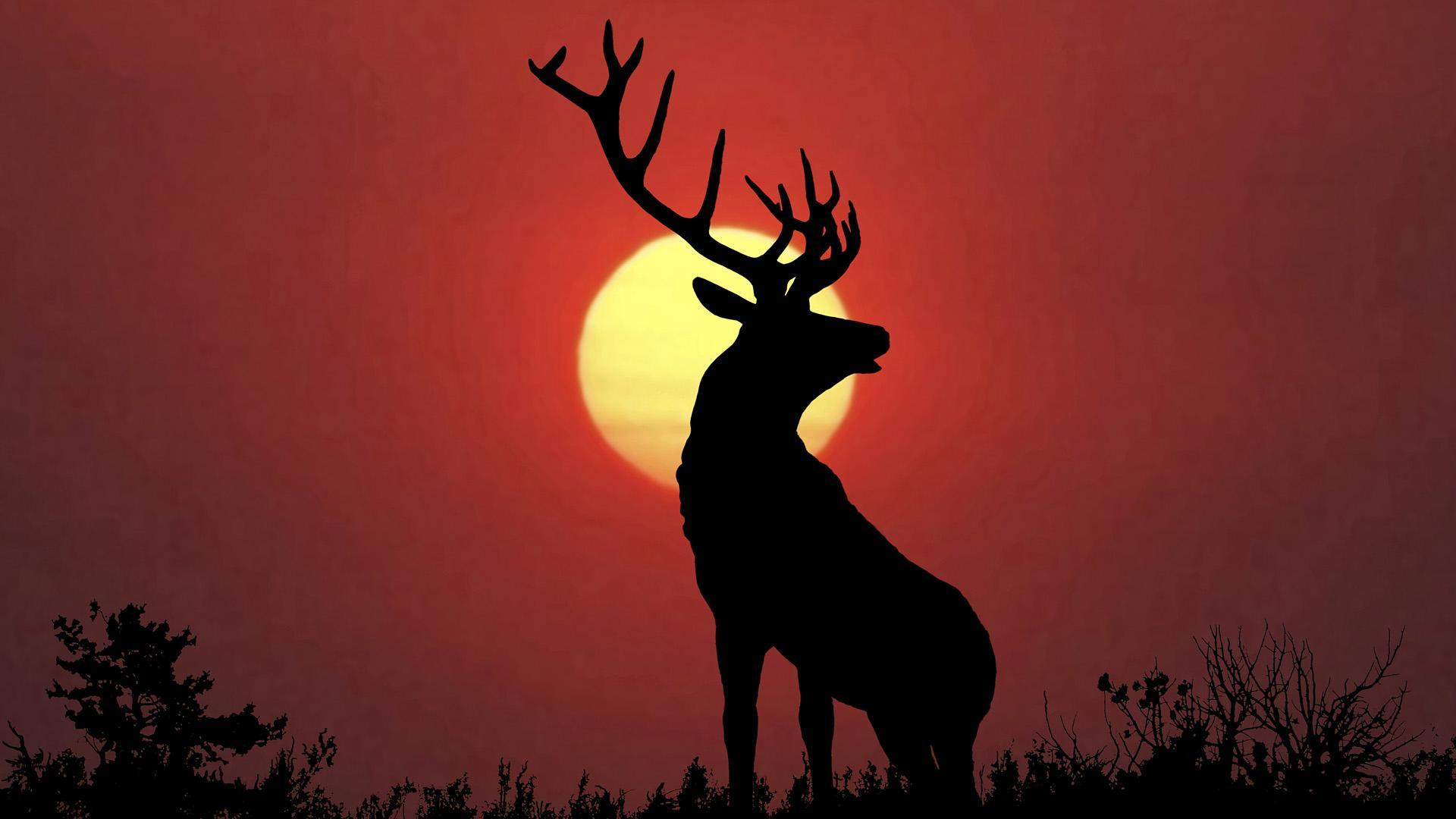 Rusa Wallpaper For Android - APK Download