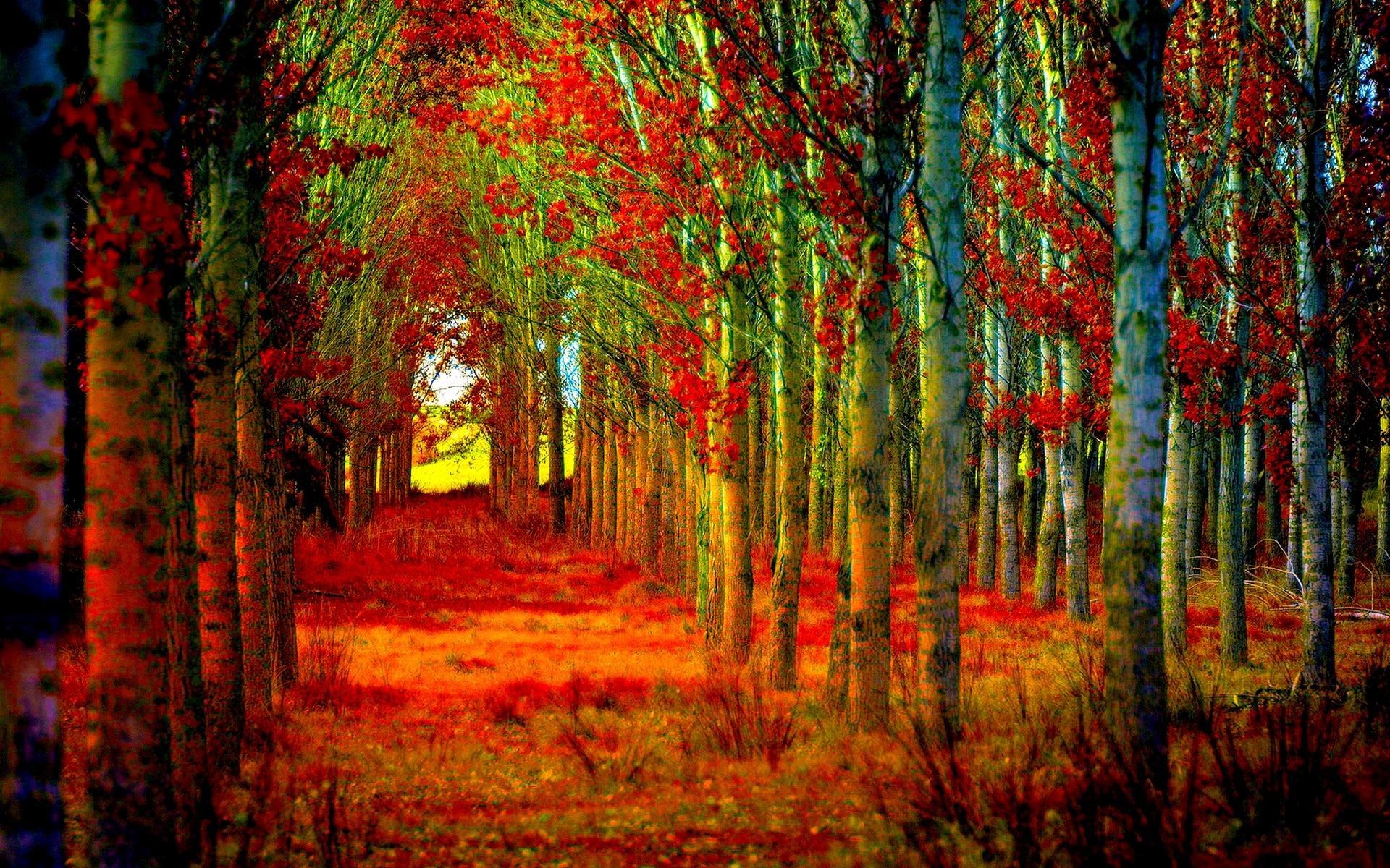 12 Wallpaper Pemandangan Hutan Pemandangan Indah Sekali