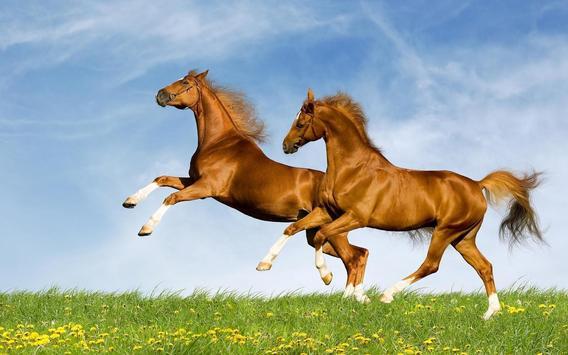 Horse Wallpapers screenshot 1