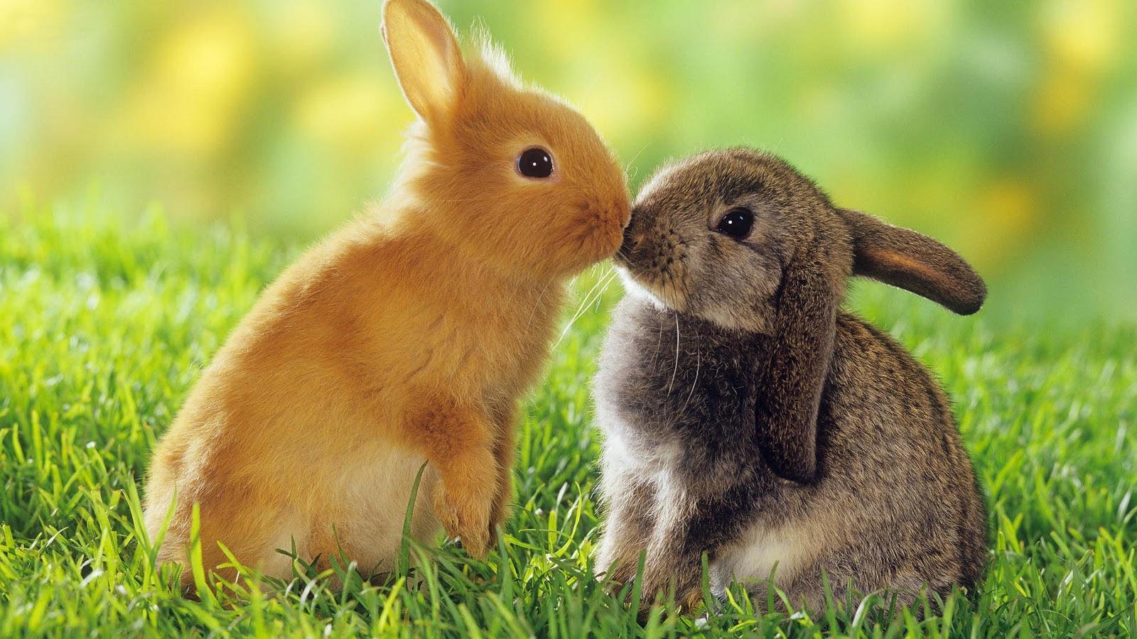 Android 用の ウサギの壁紙 Apk をダウンロード