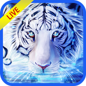 Tiger Live Wallpapers 2018-Latest Tiger Background icon