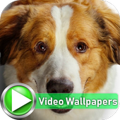 Dog Slowmotion Video Wallpapers icon