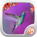 Bird Sounds Ringtones Free