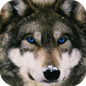 4K Wolf Lock Screen icon