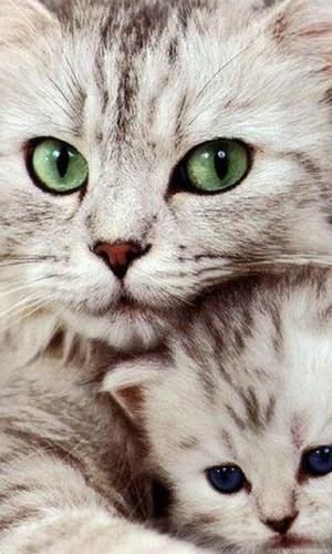 Cute Cat Wallpaper 4k 2020 For Android Apk Download
