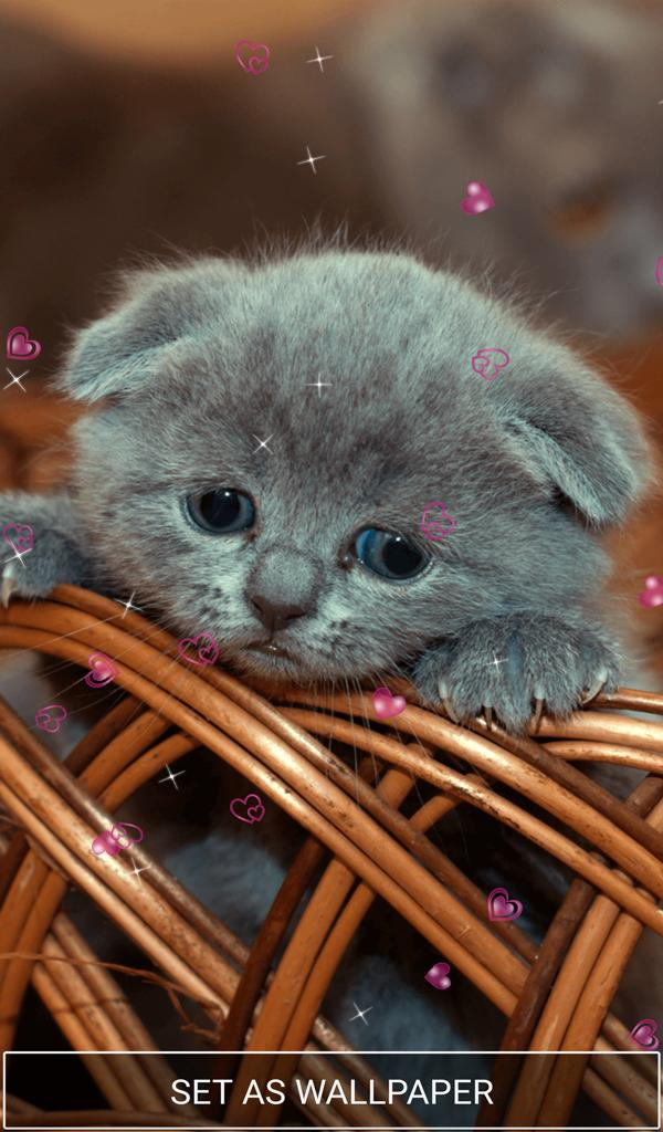 Wallpaper Lucu Gambar Kucing Comel Kucingcomel Com