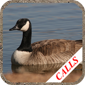 Goose hunting calls. Waterfowl hunting decoy icon