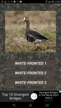 Goose hunting calls. Waterfowl hunting decoy poster
