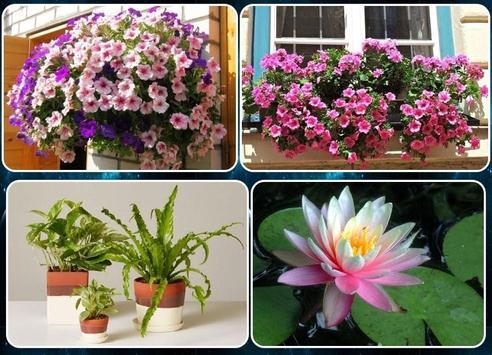various flower plants poster