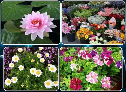 various flower plants screenshot 1