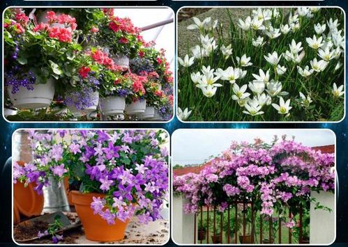 various flower plants screenshot 2