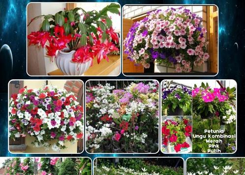 various flower plants screenshot 4