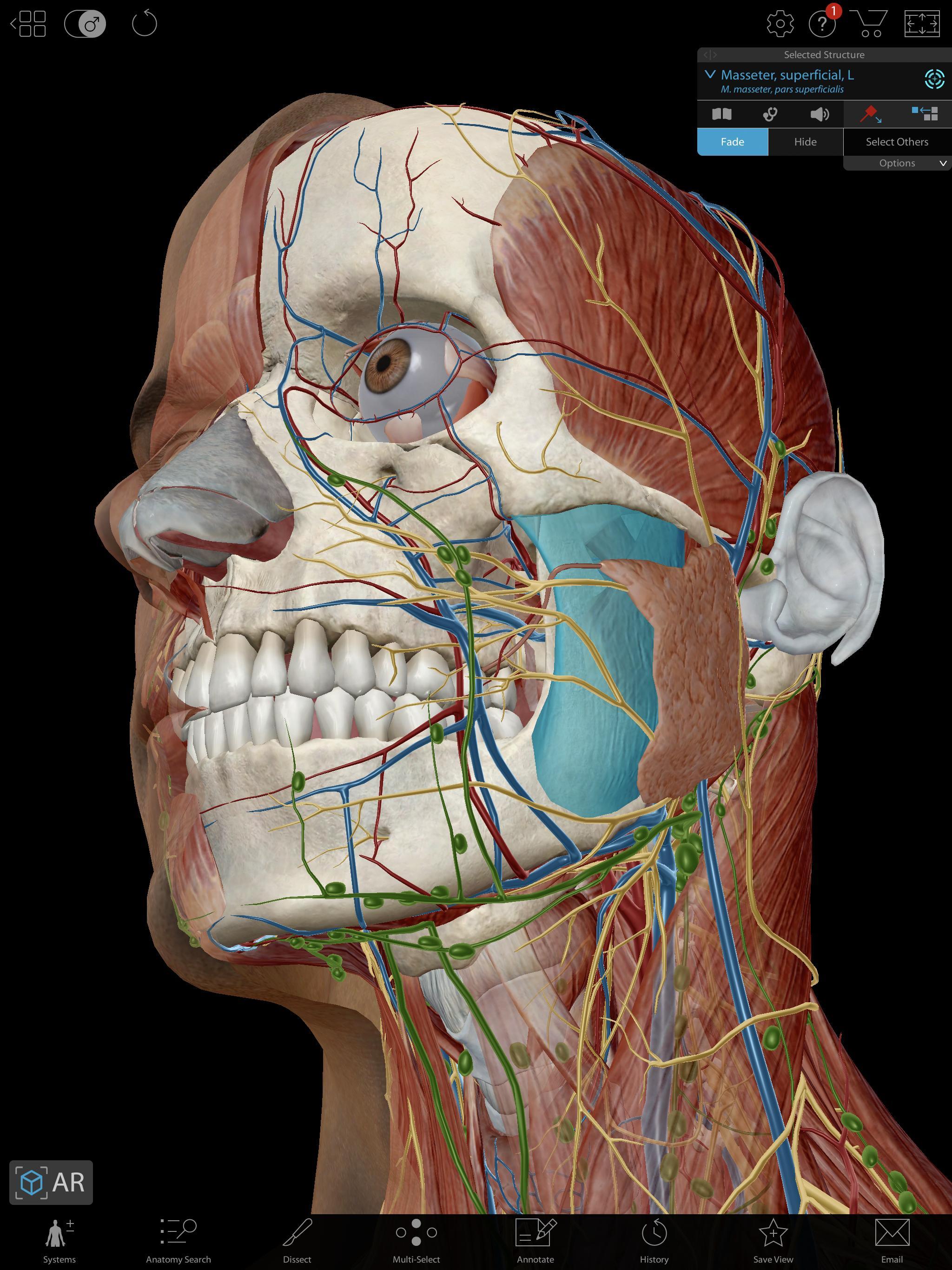 human anatomy atlas 2019 free download