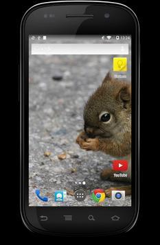 Cute Animal Babies Wallpaper تصوير الشاشة 4
