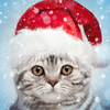 Christmas Photo Frames, Effects & Cards Art 🎄 🎅 أيقونة