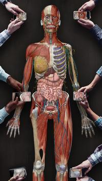 Human Anatomy Atlas 2021:Complete 3D Human Body screenshot 6