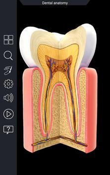 Dental  Anatomy screenshot 5