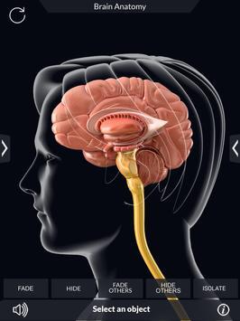 Brain Anatomy Pro. screenshot 10
