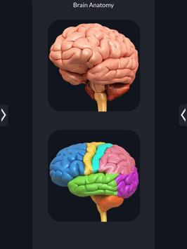 Brain Anatomy Pro. screenshot 8
