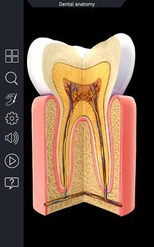 Dental Anatomy Pro. poster