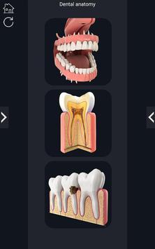 Dental Anatomy Pro. screenshot 1
