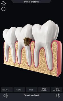 Dental Anatomy Pro. screenshot 3