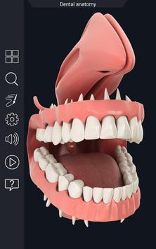 Dental Anatomy Pro. screenshot 4