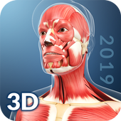 My Muscle Anatomy for Android - APK Download